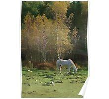 Rural Autumn Pasture Beauty Poster