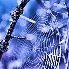 Bleu Silk by Ann Eldridge