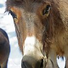 The Little Burro Says, 'Here's Looking at You Kid' by Corri Gryting Gutzman