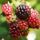 Blackberries by Ginger  Barritt