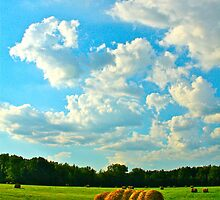 hay by Marcella Hadden