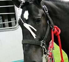 Adorned Percheron Mare by Al Bourassa