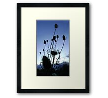 Teasels (Scottish streamside, November) Framed Print
