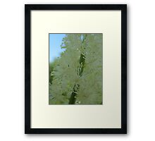 Bottle Brush White Flower Framed Print