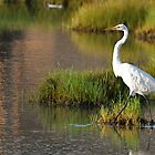 Morning Egret by Monte Morton