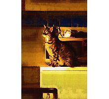Window Gazer Photographic Print