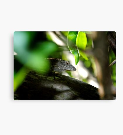 Sly! Canvas Print