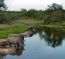 At the waterhole... by Carisma