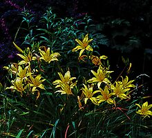 Lilies in the evening by Mike  Kinney
