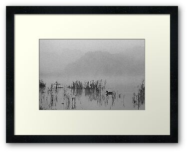 misty morning by nadine henley