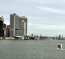 harbor gull - new york harbor by John Carey