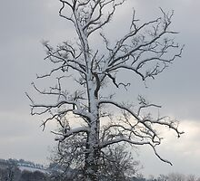 Snow in Tiverton January by daintyriches