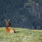 Enjoying the View by Richard Williams