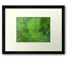 green fuzz (Komachi) Framed Print