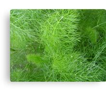 green fuzz (Komachi) Canvas Print