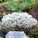 Lichen Bunch by copperhead