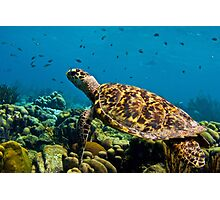 Sea Turtle on Bonaire's Reef Photographic Print