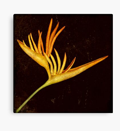Botanica - Heliconia Psittacorum (Parakeet flower) Canvas Print