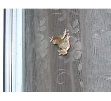 Tree Frog on the Window Screen Photographic Print