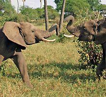 Duelling Elephants, Tarangire National Park, Tanzania by Adrian Paul