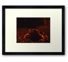 frog at large Framed Print