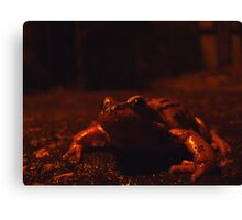frog at large Canvas Print