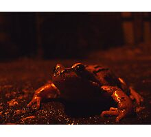 frog at large Photographic Print