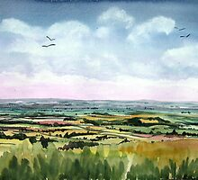 """""""Mewing Buzzards"""" - Neroche Forest, Blackdowns, Somerset by Timothy Smith"""