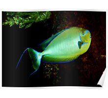 Underwater world 4 Poster