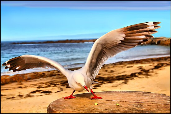 Spread Your Wings by Shannon Rogers