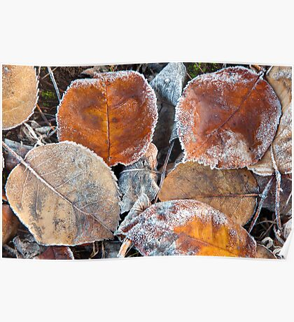 Frosty Leaves 1 - Bellarine Peninsula Poster