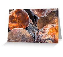 Frosty Leaves 2 - Bellarine Peninsula Greeting Card