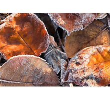 Frosty Leaves 2 - Bellarine Peninsula Photographic Print