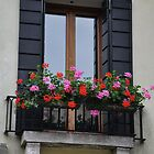window box by Karen E Camilleri
