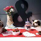 Lulu & Finn Caturday Poker by AlyssaSbisa