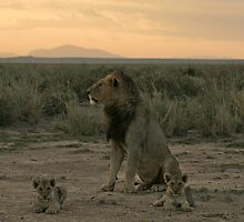 Male lion and cubs by Graeme Shannon