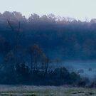 Foggy Morning by Regenia Brabham