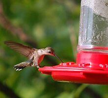 Hummingbird #2 by JackieSmith