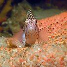 Hawk Fish Face Off by JimDodd