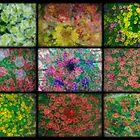 Floral Blurl by Michael Rubin