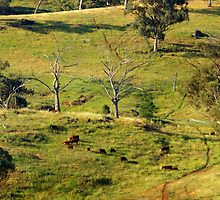 SPRING PASTURE IN THE HILLS. by Helen Akerstrom Photography