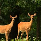 Two Does by the Woods by Susan Blevins