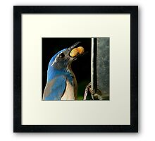 These Jays are Full of Personality Framed Print