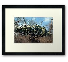 The Old Renegade Framed Print