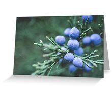 Blue Juniper Berries Macro Photography Greeting Card