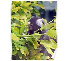 Inquisitive marmoset II Poster