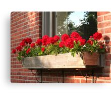 Geraniums in a Windowbox Canvas Print