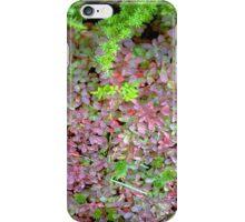 Carpeted Floor iPhone Case/Skin