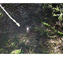 web of desire Photographic Print