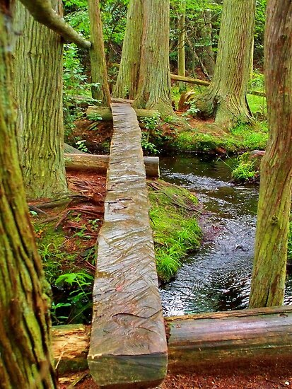 Over the Brook  the Red Cedar trail     by fiat777